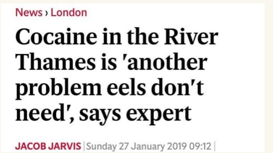 Cocaine in the River Thames is another problem eels don't need.